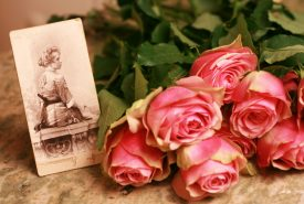 Old picture and  pink roses